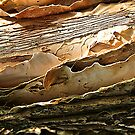 Peeling Paper-bark by ronsphotos