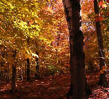 October in NH by maxy