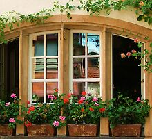 Window Garden by jules572