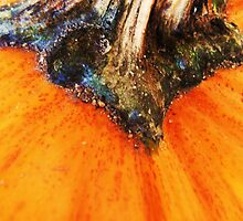 Pumpkin by farmbrough