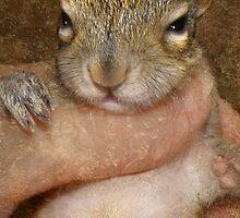 Raising Wildlife Babies by Kay Kempton Raade