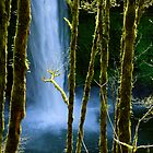 Silver Creek Falls by Zane Paxton