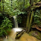 Sempervirens Falls by Zane Paxton