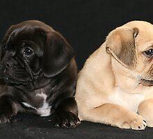 pugalier pups... by cherishdmoments