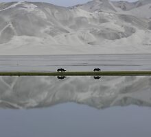 Mirrored Yaks by openyourap