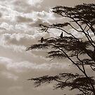 Storks, 2009 by Sarah Mackie