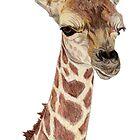Baby Giraffe by Pamela Stirling