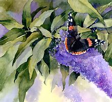 Buddleia with Red Admiral Butterfly by artbyrachel