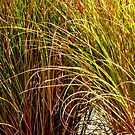 TALL fescue ^ by ctheworld