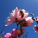 Peach Blossom Buzz by Teacup