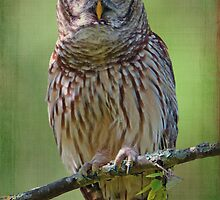 Barred Owl in my Backyard by Bonnie T.  Barry