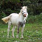 Pretty Lil White Pony  by Ruth Lambert