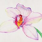 Cymbidium Orchid by Marilyn Brown
