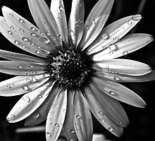 Water drops. by dhphotography