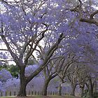 goodna blooming by betty porteus