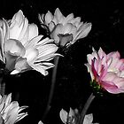 Lilac by karenkirkham