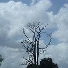 Dead Tree by Jess Jones