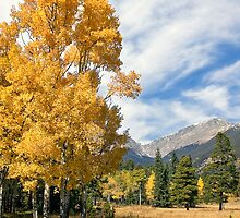 Fall in Rocky Mountain National Park by Ann J. Sagel