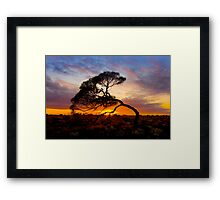Natures Bow Framed Print