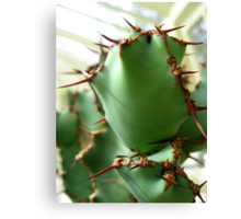 Prickly Cactus no.3 Canvas Print