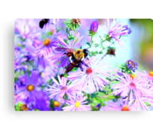 Bumble Bee Beautiful Flower Canvas Print