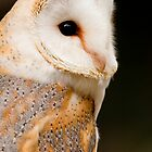 Barn Owl by Stuart Robertson Reynolds