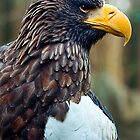 Steller&#x27;s Sea Eagle by Stuart Robertson Reynolds