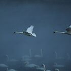 Swans in the Mist by Tizme