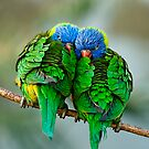 Lorikeets In Love by Stuart Robertson Reynolds