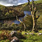 Meldon Reservoir, Dartmoor National Park, Devon by Squealia