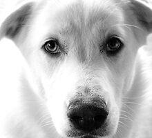 Adopt a Friend by Robin Nellist