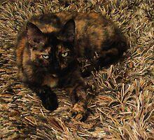 Cammo Cat by Robin Nellist