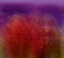 like a dream by Linda Sannuti