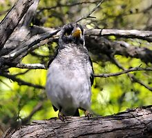A new baby noisy minor in our yard by bobbyverrills