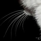 Whiskers by amyleahag