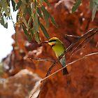 Desert Bird by juellie