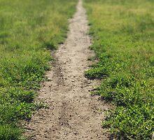 Meadow Path, blurred background by Nikolaj Masnikov