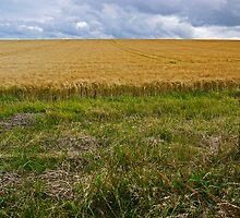 Tweed Valley Countryside by Ryan Davison Crisp