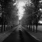 Memory lane by Angela King-Jones