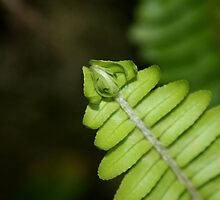 Fish bone Green Fern by TeAnne