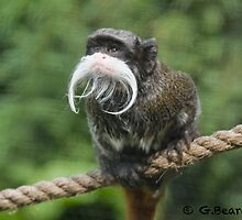 Bearded Monkey by Gavin Beard