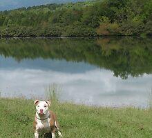 Rose At The Lake by Ginny York