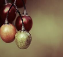 life savour 02 by Aimelle