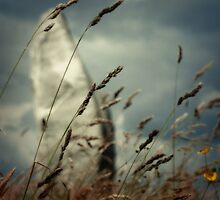 the way the wind blows by Cate Davies