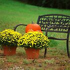 fall bench by Tracey Hampton
