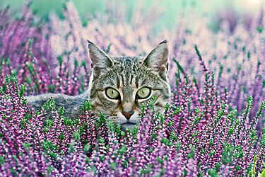 I spy... by Jeanne Horak-Druiff
