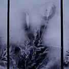Night Prairie Triptych by evon ski