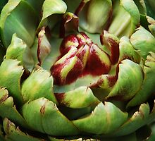 Artichoke Textures by Ralph Angelillo