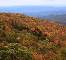 Blue Ridge Parkway Mountain Foliage by Lisawv