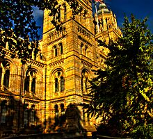 Natural History Museum by Dawn OConnor